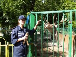 Крымские эмчеэсники  спасли раненого сокола сапсана