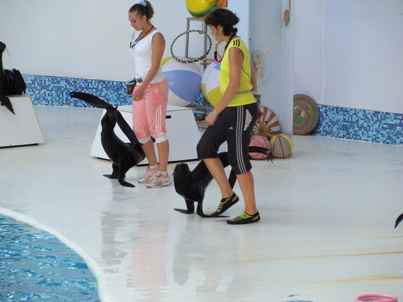 Евпаторийский дельфинарий приглашает в морской вояж