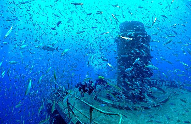 Возле Ялты   создадут    искусственные рифы