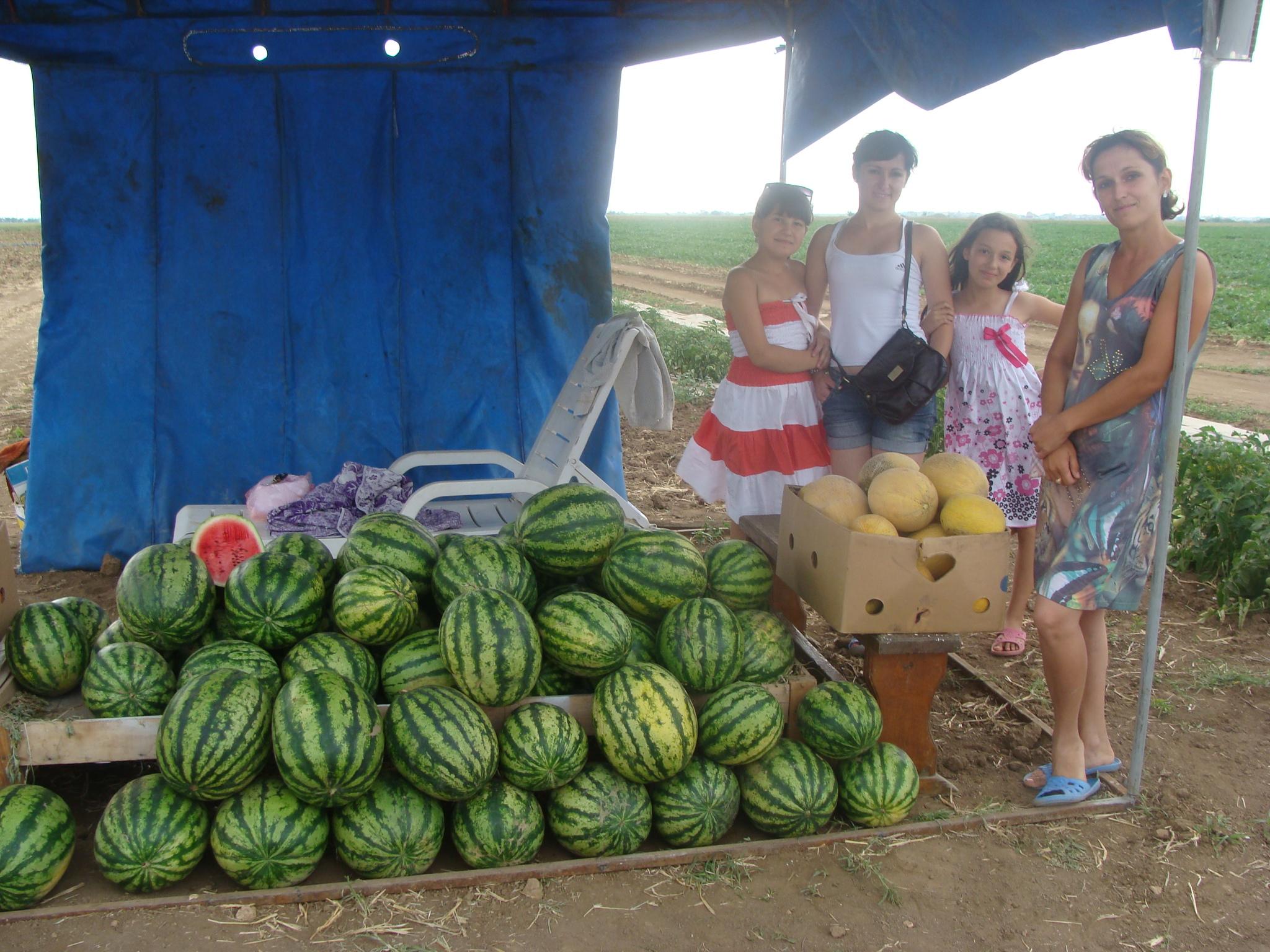 В Крыму созрели арбузы и дыни