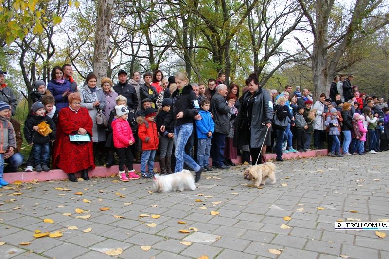 В Керчи выбрали лучших собак Украины и Крыма