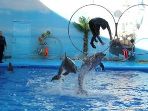 представление дельфинов, Алушта