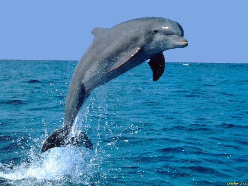 Меняем дельфина на корову (видео)