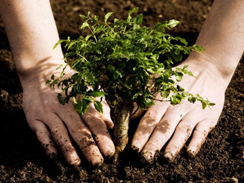 «Остановись, посади свое дерево!»