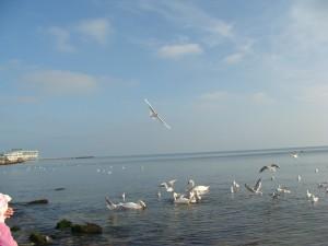 лебеди, Евпатория