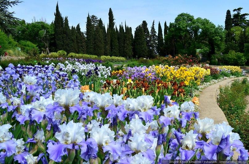 Весна в Никитском ботаническом саду