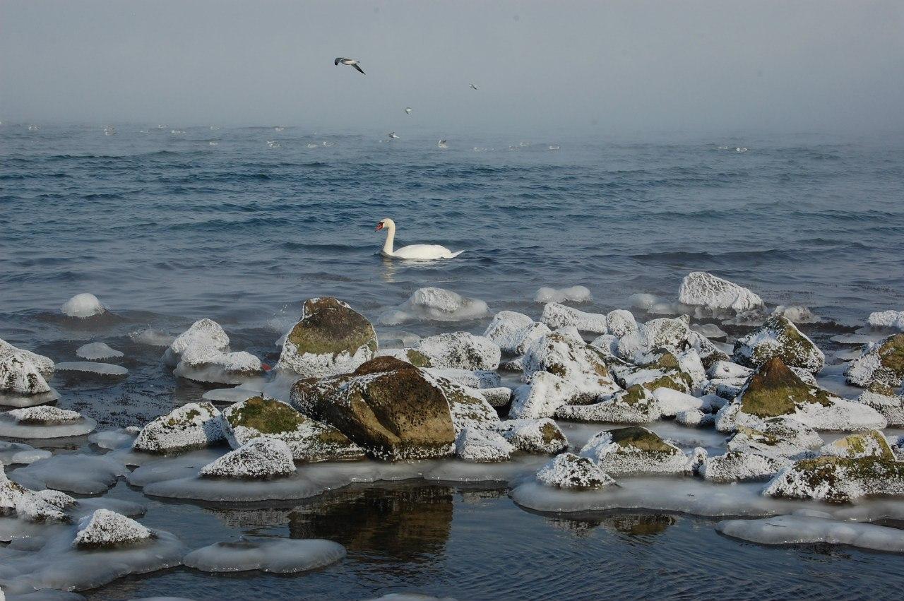 Крымские спасатели освободили из ледяной ловушки лебедя