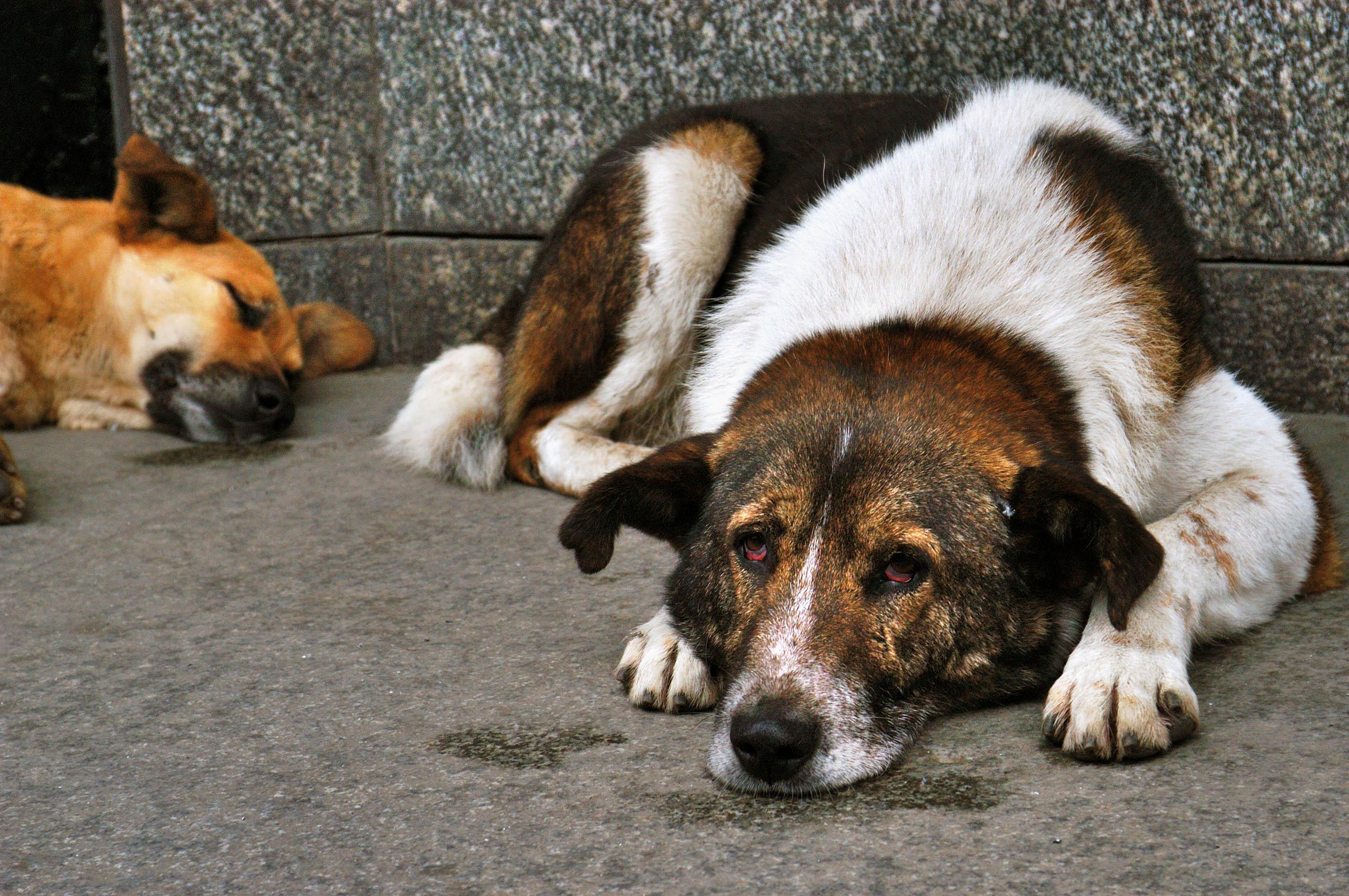 Собака бывает кусачей только от жизни собачей